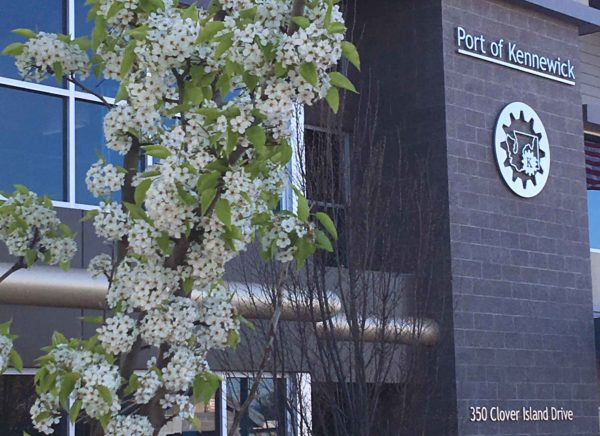 Flowering tree in front of Port of Kennewick offices.
