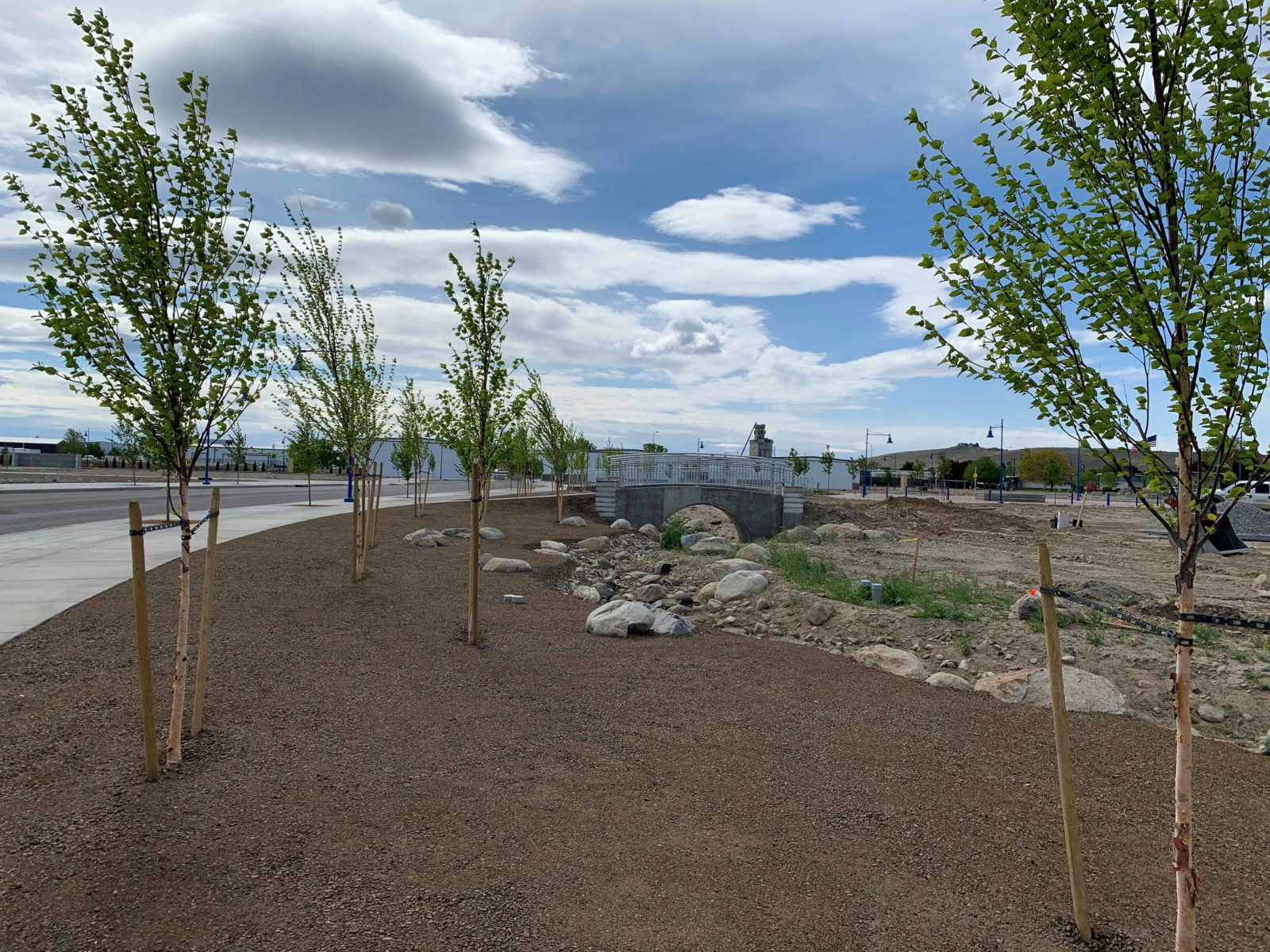 Trees in bloom line a new roadway in Vista Field phase one.