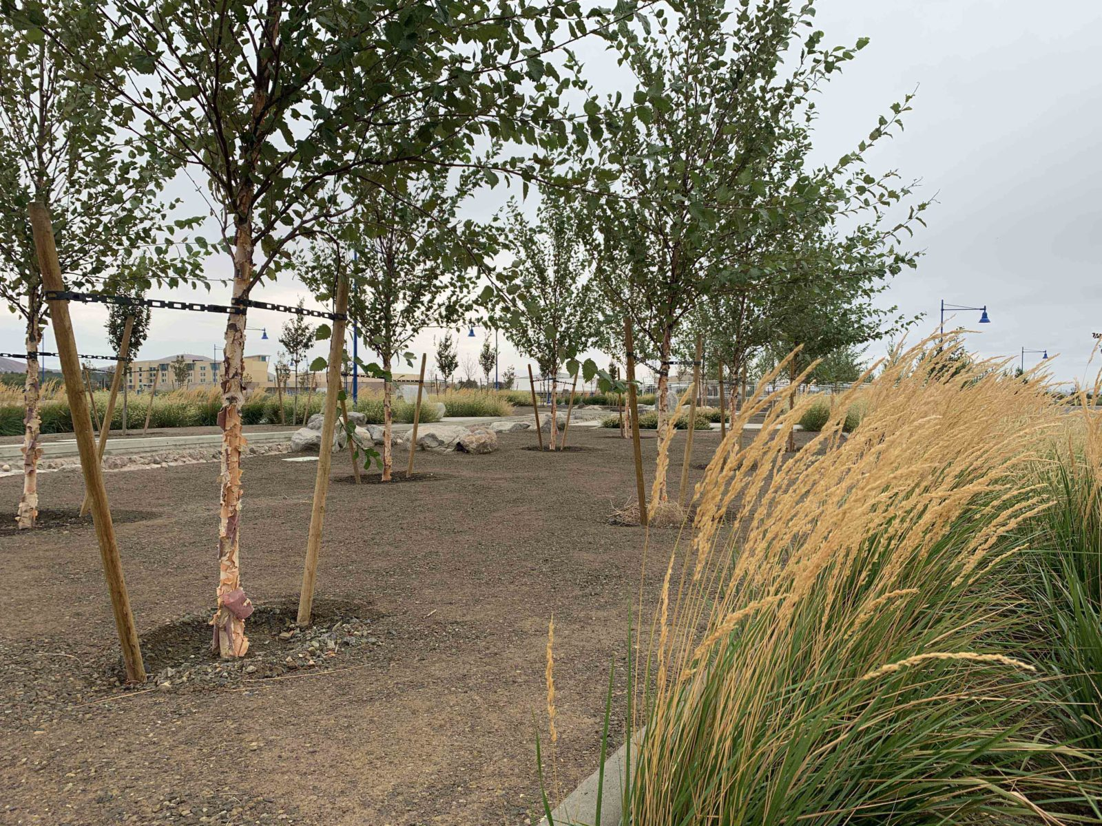Trees and other landscaping planted at Vista Field during phase one redevelopment.