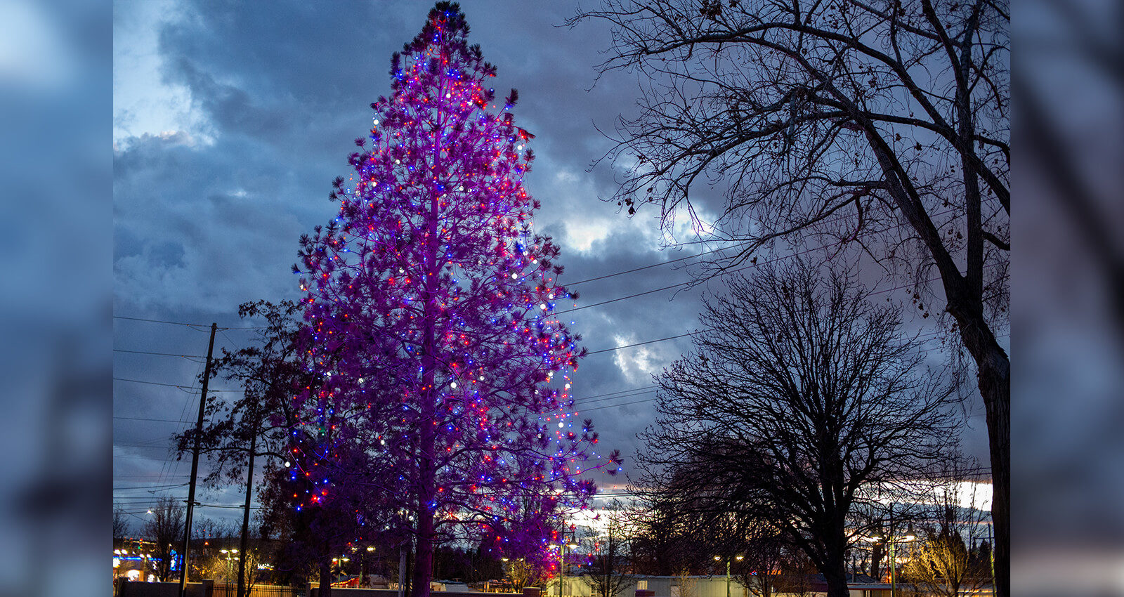 Veterans' Christmas Tree at night with lights glowing.